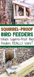 Best Squirrel-Proof Bird Feeders - Which Squirrel-Proof Bird Feeders REALLY Work? birdfeeders.involvery.com #gardenideas #backyardideas #lifehacks