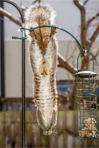 Squirrel proff bird feeders - do they REALLY work to keep squirrels out of my bird feeders?