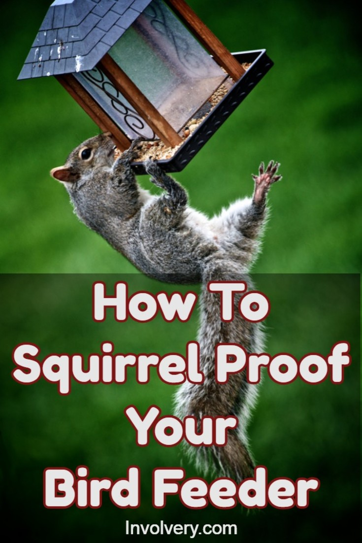 Best bird feeders - How do you keep squirrels out of your garden ...