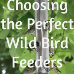wil bird feeders buying guide