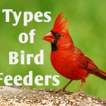 types-of-bird-feeders