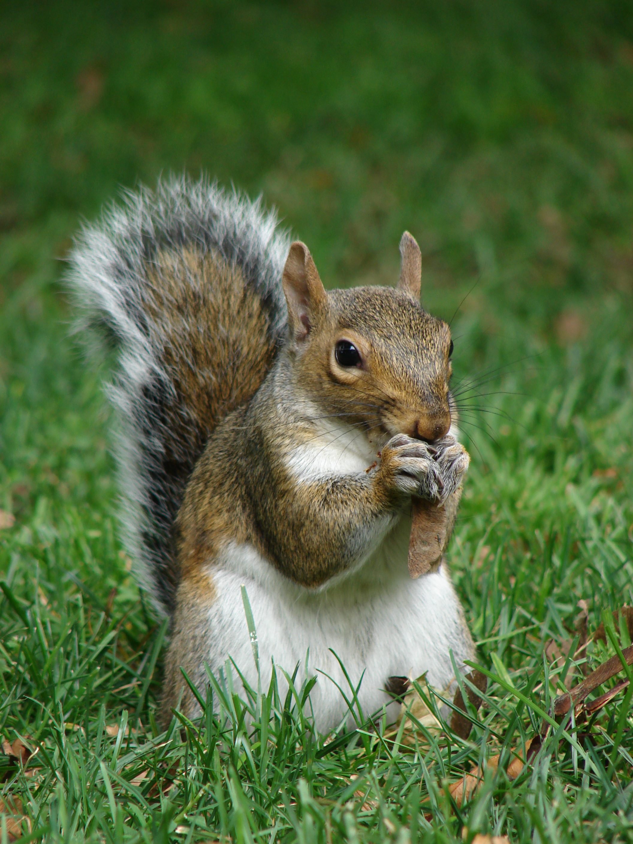 squirrel proof bird feeders can offer a measure of prevention against damaging by rodents and various unwanted birds imposing on your back yard - Squirrel Proof Bird Feeders