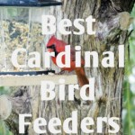 best-cardinal-bird-feeders