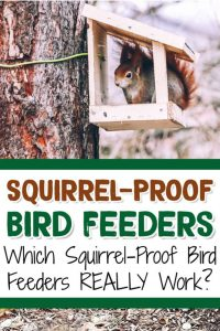 Best Squirrel Proof Bird Feeders for Keeping Squirrels OUT of your backyard bird feeders #gardenideas #backyardideas