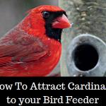 attract-cardinals-to-bird-feeder-featured