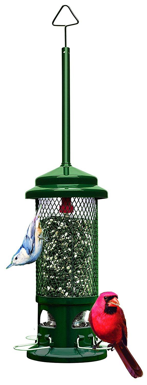 Best backyard bird feeder
