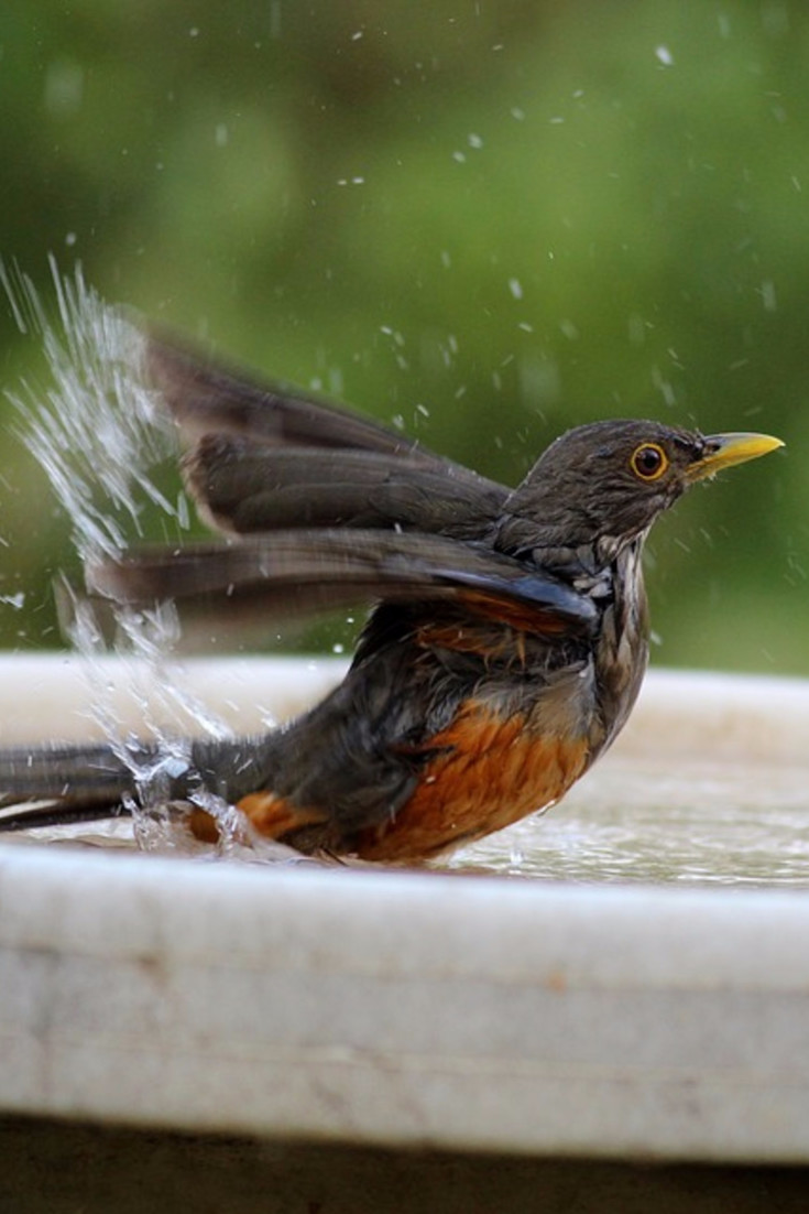 This bird is having a TON of fun in this backyard bird bath!
