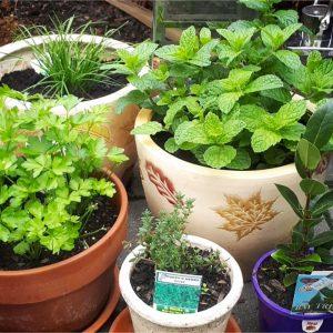 Herbs that attract hummingbirds #backyardideas #gardenideas